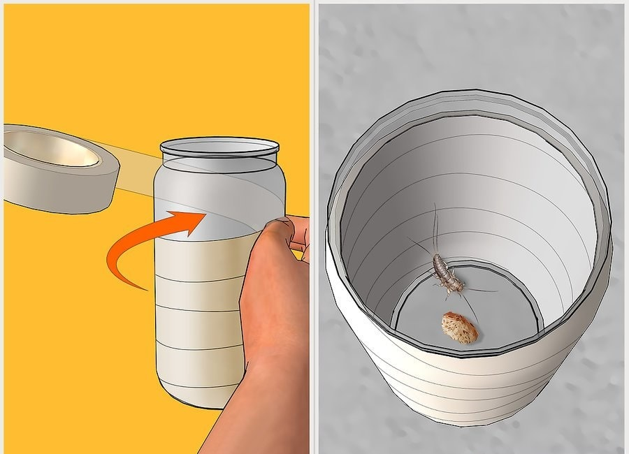Rybiki — jak się pozbyć? Rozłóż domowe szklane pułapki na rybików.