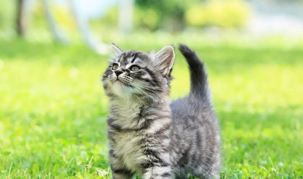 Jak nauczyć kota sztuczek?
