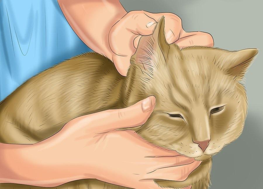 Trzymaj szampon z dala od oczu, nosa, ust i uszu kotów.