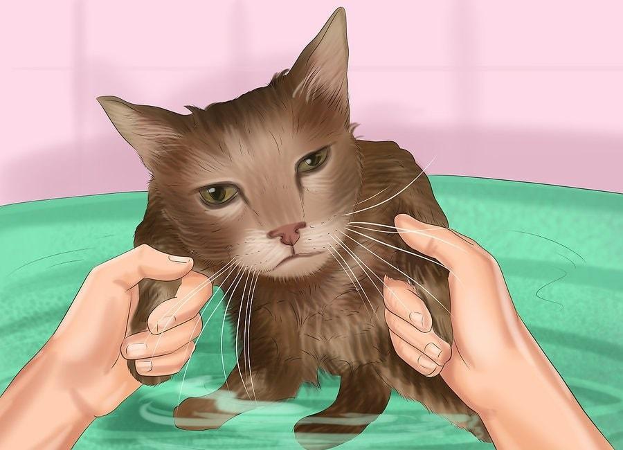 Obserwuj kota pod kątem paniki i niepokoju.