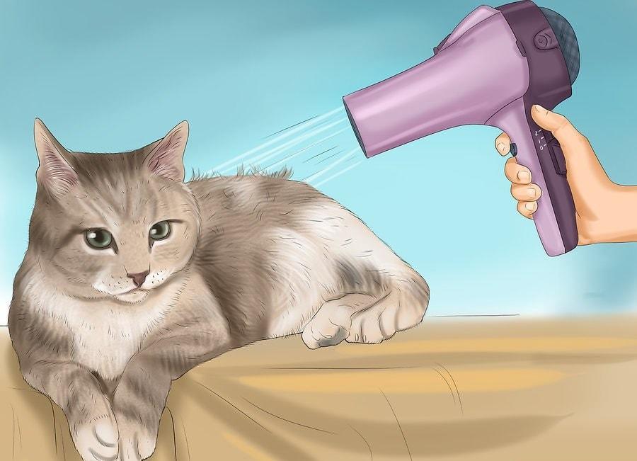 akończ suszenie kota.