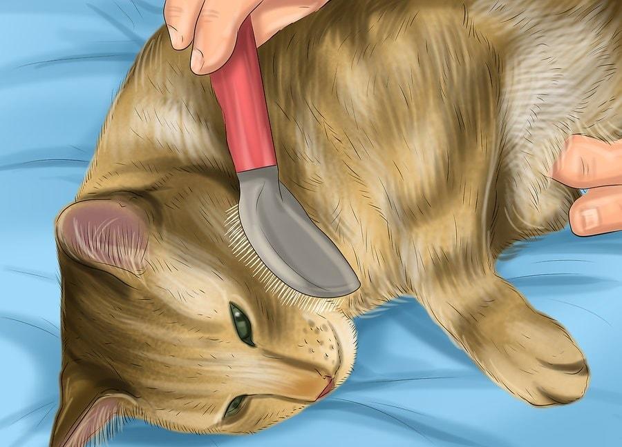 Szczotkuj kota.