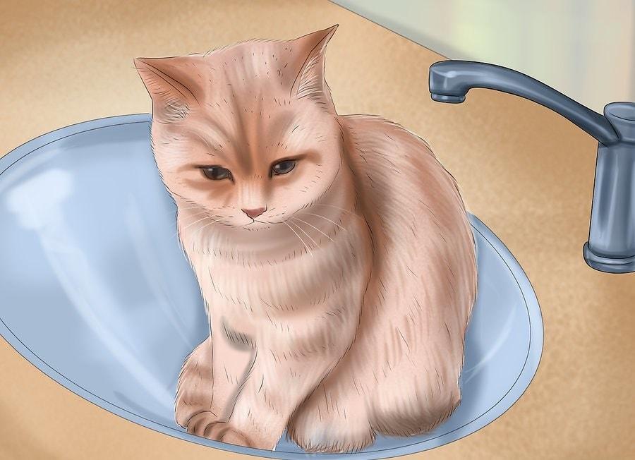 Wykąp swojego małego kotka w zlewie lub małej wannie.