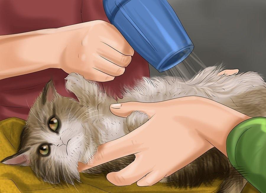 Daj swojemu kotowi suchą kąpiel.