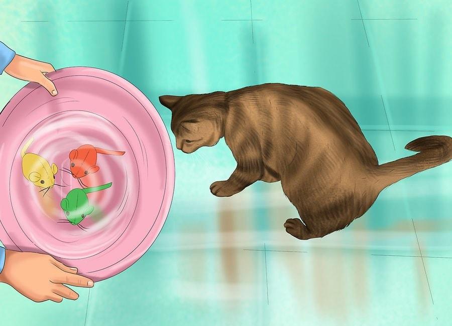 Spraw, by Twój kot chciał się wykąpać.