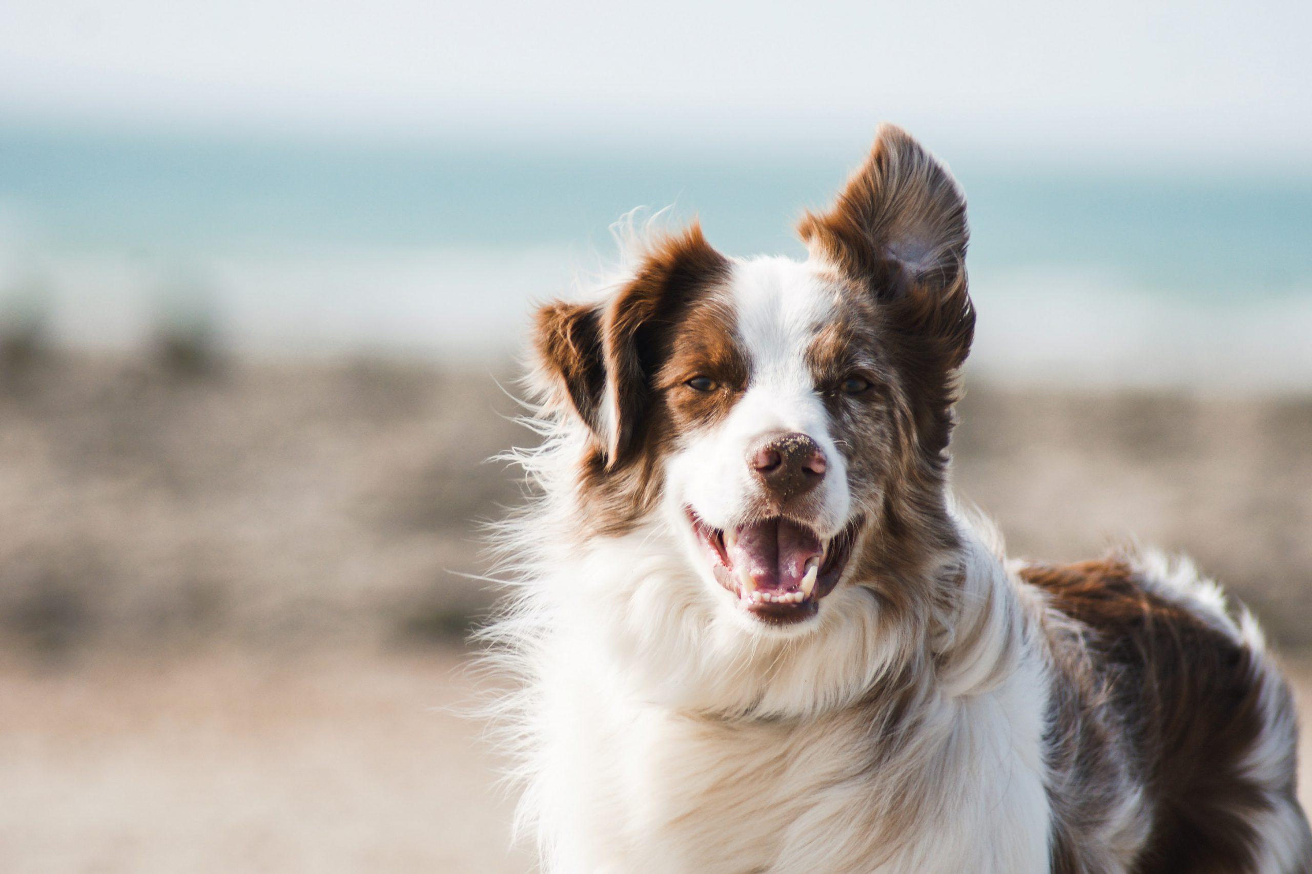 dog photo 2
